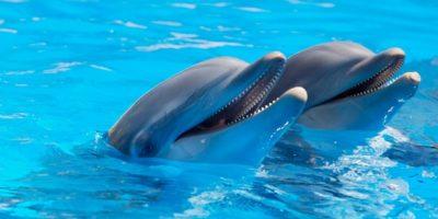 Chráněno: Fotografie Delfínků