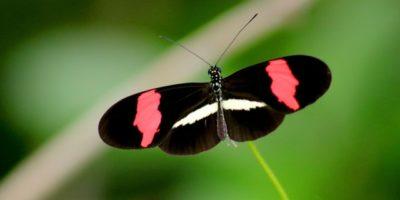 Chráněno: Fotografie Motýlků